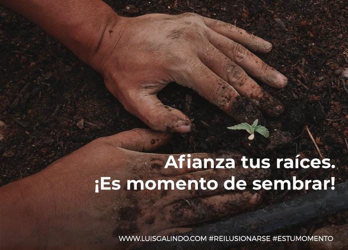 afianza tus raíces